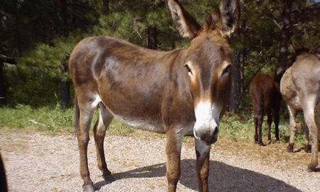 basauri_azbarren_burros_caballos