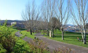 arbolado zonas verdes